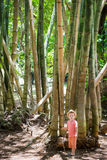 Boy at bamboo Stock Photography