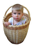 Boy in basket royalty free stock image
