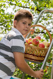Boy with a basket of apples and  ladder Royalty Free Stock Photos