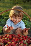 boy with a basket of berries Stock Image