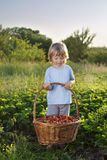boy with basket of berries Royalty Free Stock Photography