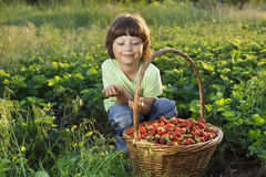 boy with basket of berries Royalty Free Stock Images