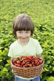 boy with basket of berries Stock Photo