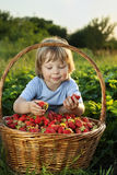 Boy with basket of berries Stock Images