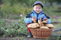 Boy with a basket of mushrooms Royalty Free Stock Images