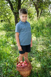 Boy with a basket of red apples Royalty Free Stock Photography