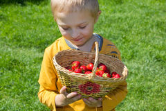 Boy with a basket of strawberries. Boy holding a basket of strawberries and berries watching Royalty Free Stock Images