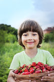 Boy with basket of strawberry Stock Photos