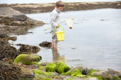 Boy on beach collecting shells Royalty Free Stock Photo