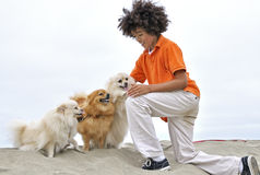 Boy on the beach petting dogs Stock Photos