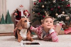 Boy with beagle dog on christmas stock photo