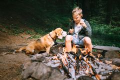 Boy with beagle dog have a picnic near campfire on forest glade Stock Photos