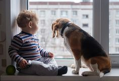 Boy and Beagle dog sit together on the window sill. European boy and Beagle dog sit and play on the windowsill in the room Royalty Free Stock Images