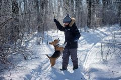 Boy and Beagle dog in winter snowy forest stock image
