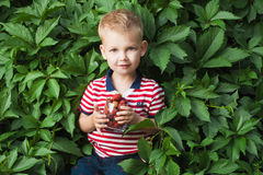 Boy with berrys Stock Photography