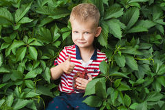 Boy with berrys Royalty Free Stock Image