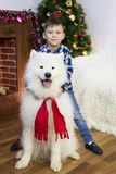 A boy with a big dog at Christmas. Little boy meets a holiday with a big white dog near a Christmas tree Royalty Free Stock Photos