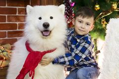 A boy with a big dog at Christmas. Little boy meets a holiday with a big white dog near a Christmas tree Royalty Free Stock Images