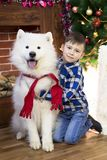 A boy with a big dog at Christmas. Little boy meets a holiday with a big white dog near a Christmas tree Royalty Free Stock Photography