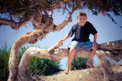 Boy on a big tree branch Royalty Free Stock Photography