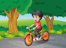 A boy biking near the big trees Royalty Free Stock Photo