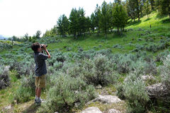 Boy with Binoculars. A boy uses binoculars in Yellowstone park to view wildlife stock images