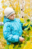 Boy in a birch forest in autumn Royalty Free Stock Photo