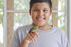 Boy and bird Stock Photos