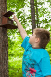 Boy of about bird feeders Royalty Free Stock Images