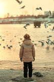 A boy and a bird on the river Royalty Free Stock Images