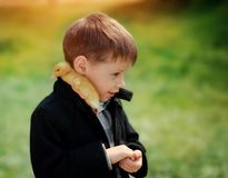 Boy and birds Stock Photography