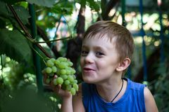 The boy bites off a piece of a bunch of grapes royalty free stock photos