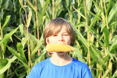 Boy biting corn Royalty Free Stock Photography