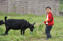 Boy and black goat Stock Image