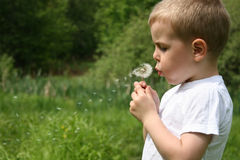 Boy blow dandelion Stock Photos