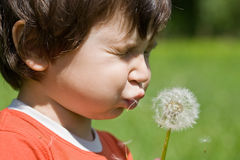 Boy blow dandelion Royalty Free Stock Photos