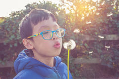 Boy blowing away flower in garden Royalty Free Stock Images