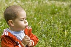 Boy blowing dandelion Stock Images