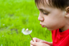 Boy blowing on a dandelion Royalty Free Stock Photos