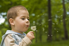 Boy blowing dandelion. In nature stock images