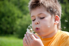A boy blowing on a dandelion Stock Images