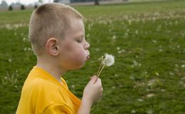 Boy blowing dandelion. Here is a photo of a young boy blowing a dandelion.  He just loves blowing all the white seeds all through the air Royalty Free Stock Images