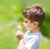 Boy blowing dandelion. Little cute boy blowing dandelion on blurred nature background Stock Images