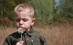 Boy blowing dandelion. Royalty Free Stock Images
