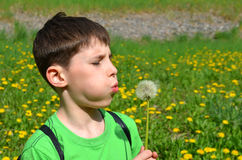 Boy is blowing on a dandelion Stock Images