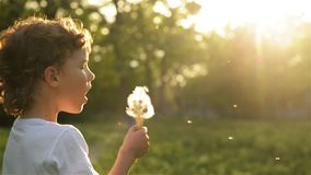 Boy blowing on dandelion beautiful sunset light. HD stock video footage