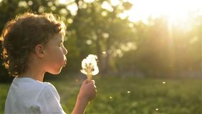 Boy blowing on dandelion beautiful sunset light. HD stock footage
