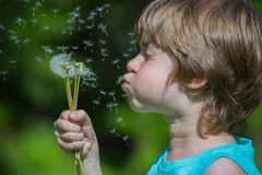 Boy blowing dandelion Stock Image