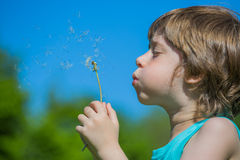 Boy blowing dandelion. Cute Boy blowing dandelion seeds Stock Photo