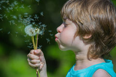 Boy blowing dandelion. Cute Boy blowing dandelion seeds Stock Photography